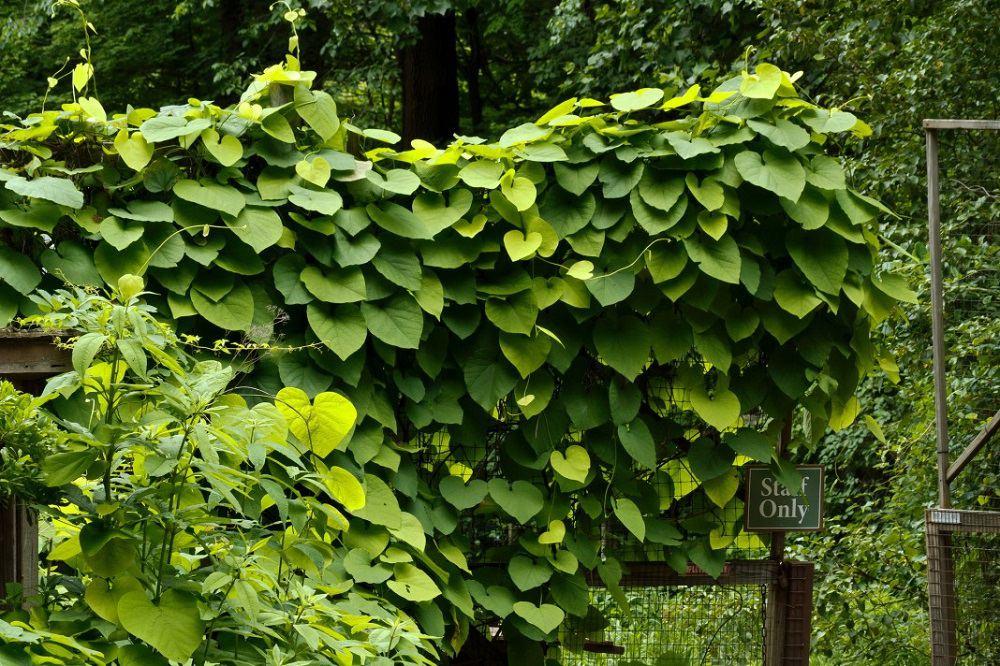 Imponujące liście