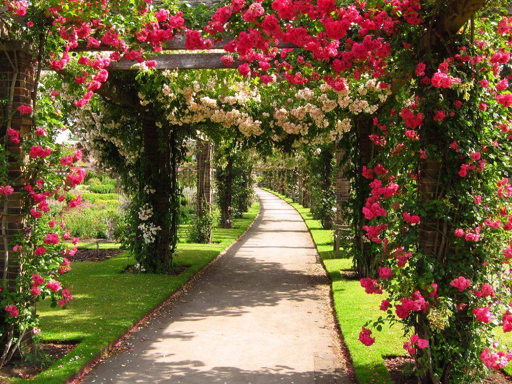 Róże potrafią stworzyć naprawdę piękny widok