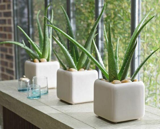 Pięć Roślin Idealnych Do Sypialni
