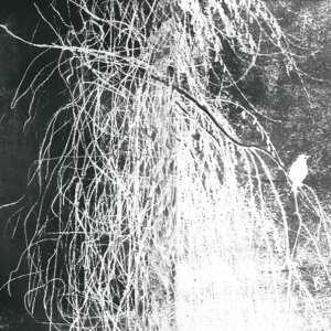 Tapeta ALBA SALIX (Contemporary), Wall & Deco