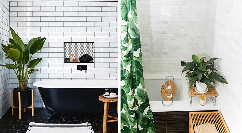 Dlaczego Warto Trzymać Rośliny W łazience Ih Internity Home