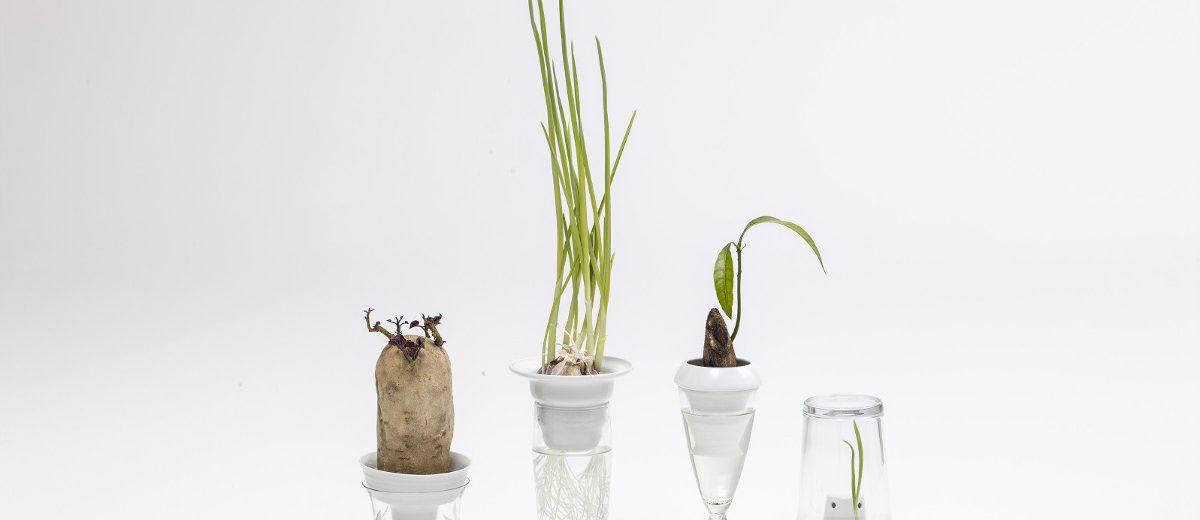 """Plantacja"", 2014, autorka projektu: Alicja Patanowska; produkcja: Porcelana Kristoff"