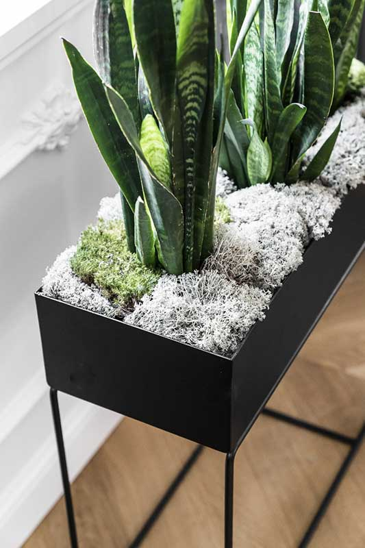 Rośliny to nieodłączny element stylowego mieszkania