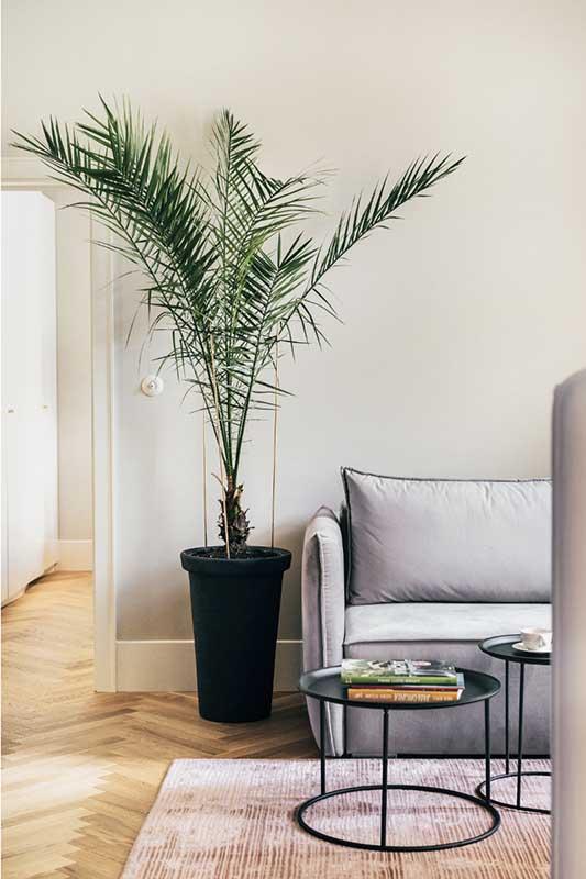 Palma w salonie | proj. lummo.