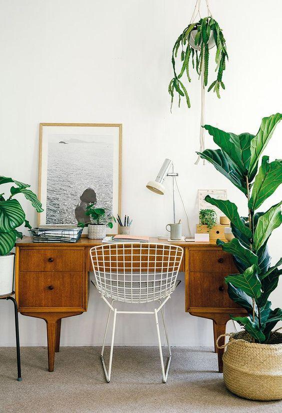 Ciekawa ekspozycja roślin w domu