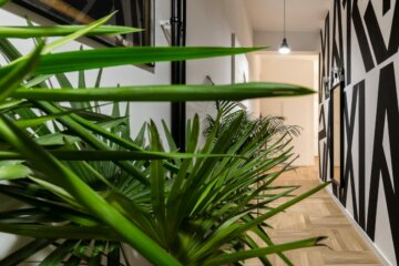 rośliny które oszczyszczają powietrze