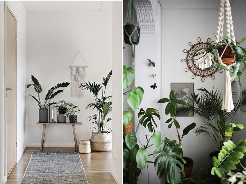 Nieodłączną dekoracją wnętrz w stylu boho są rośliny wyeksponowane w pięknych donicach i kwietnikach