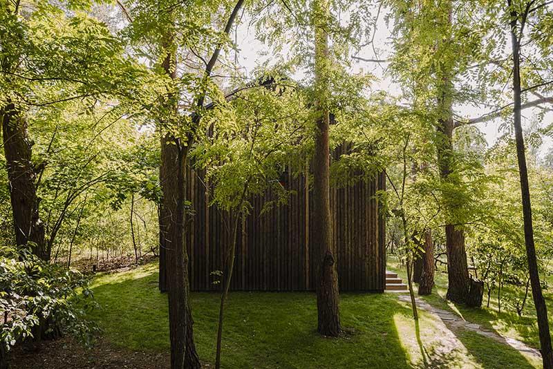 Niepowtarzalna flora wokół domu | proj.:  MP Studio Architektury www.moszczynskapuchalska.com