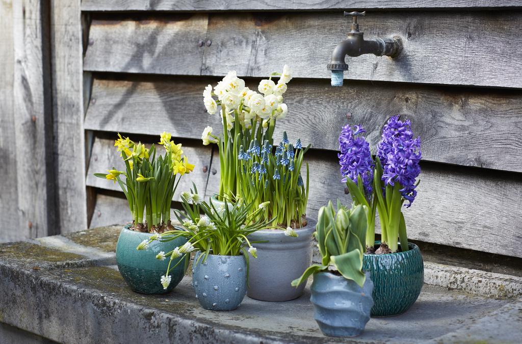 Kwiaty są najpiękniejszą ozdobą ogrodów i balkonów